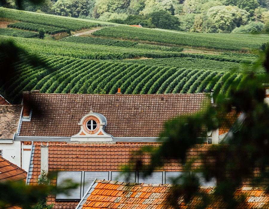 Vignes vue de la Maison Canard-Duchêne à Ludes Reims Champagne